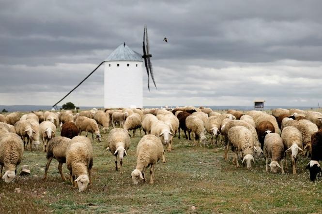 ovejas-en-campo-de-criptana-autor-bram-meijer